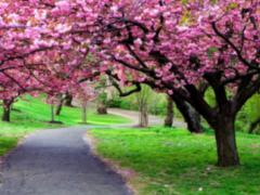 Tavaszi versek